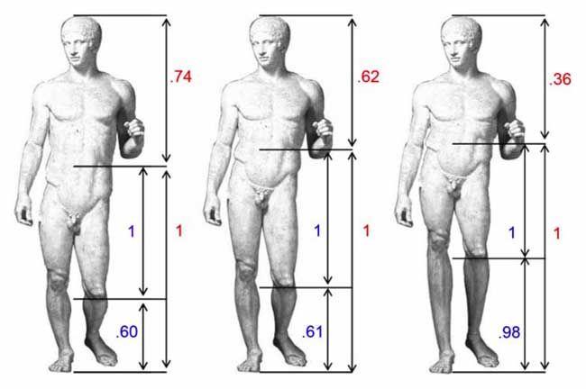 kropstyper mænd lang overkrop og lange ben